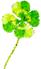 Leaf illust